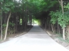 10138-new-long-winding-driveway-farmington-13